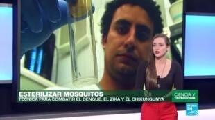 Prometedora técnica para reducir enfermedades como el zika y el dengue