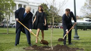El presidente de los Estados Unidos, Donald J. Trump, planta un árbol su homólogo de Francia, Emmanuel Macron, en la Casa Blanca en Washington, el lunes 23 de abril de 2018.
