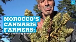 A cannabis farmer in the Rif mountains region of Morocco on March 13, 2021.