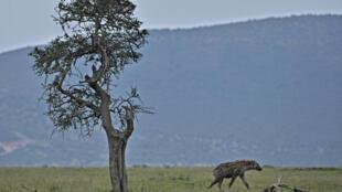 Maasai Mara's entire reserve model is under threat