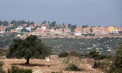 A Palestinian farmer from Nazlat Zeid village harvests an olive tree near the Jewish settlement of Shaked, near the city of Jenin.