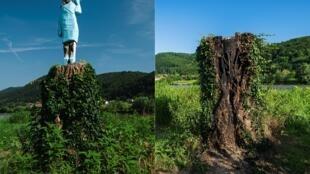 تمثال ميلانيا الخشبي قبل وبعد ازالته في مسقط راسها بلدة سيفنيتسا