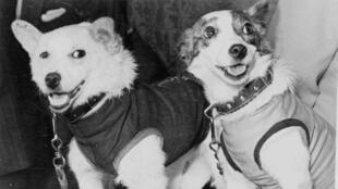 Belka et Strelka en tenue de cosmonaute, 1960.