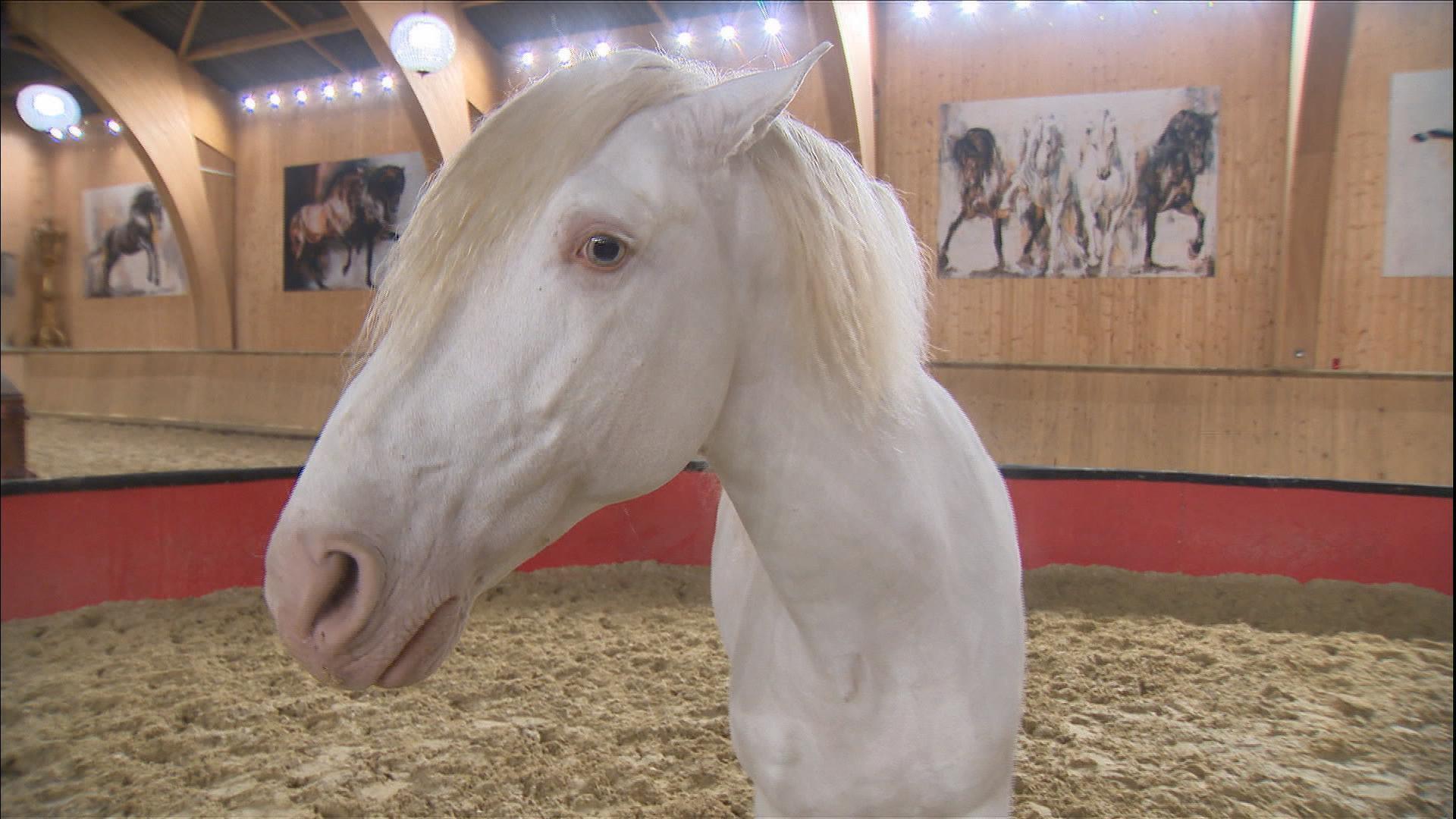 HORSE ORIGINS