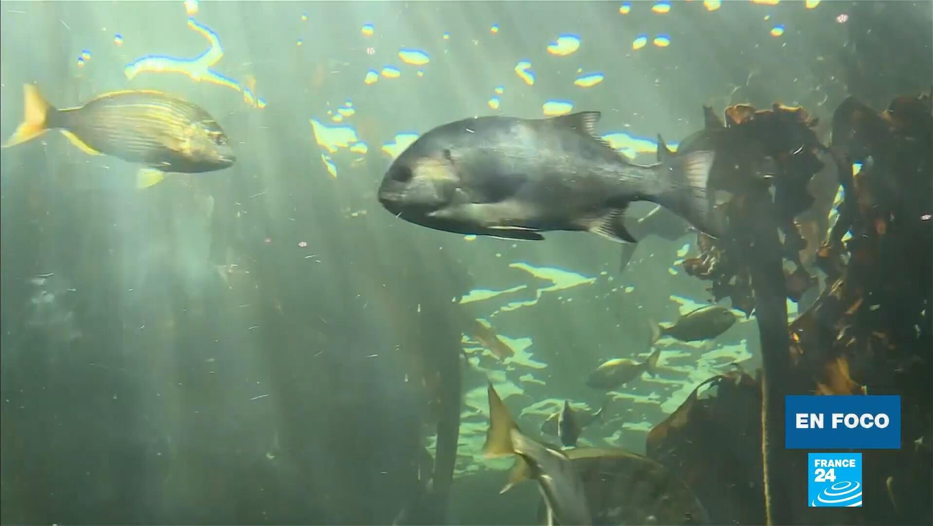 En Foco - sobrepesca Sudafrica