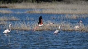 طيور على جزيرة ساموس اليونانية في 23 شباط/فبراير 2020