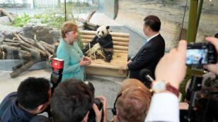 Angela Merkel et Xi Jinping regardent Jiao Qing, l'un des deux pandas du zoo de Berlin, mercredi 5 juillet 2017.