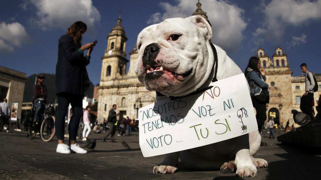 Hasta los animales participaron en las protestas. En la simbólica Plaza de Bolivar de Bogotá, Colombia, este perro pidió que las personas levanten la voz en favor de las demás especies.
