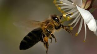 Los insecticidas neonicotinoides son considerados dañinos para las abejas.