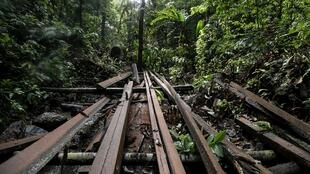 An illegal logging site discovered by Philippine environmental defenders near the tourist town of El Nido, on Palawan island