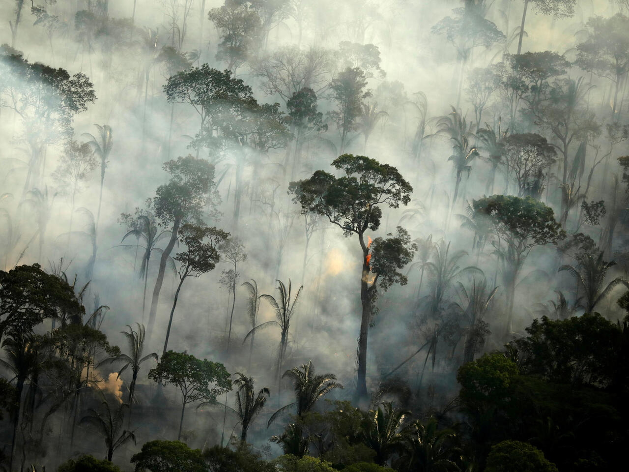 Amazon deforestation reaches a 12-year record