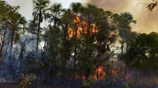 Le sommet d'urgence sur l'Amazonie réunit six pays sud-américains à Leticia, en Colombie, le 6 septembre 2019.