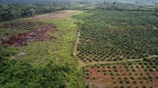 Vue aérienne d'une plantation d'huile de palme en Indonésie