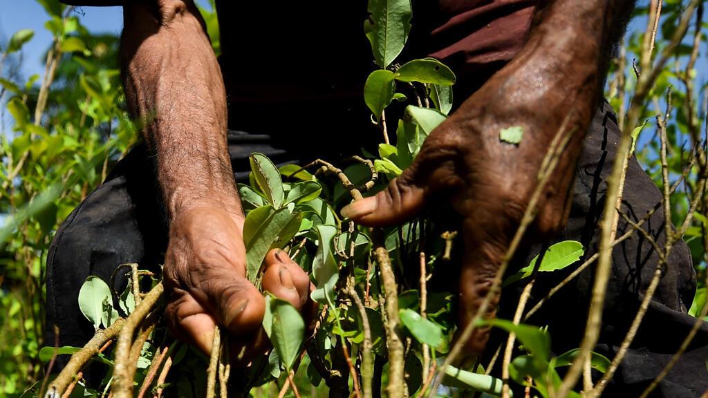Autoridades de Colombia hicieron pruebas con drones para contrarrestar los cultivos ilícitos.