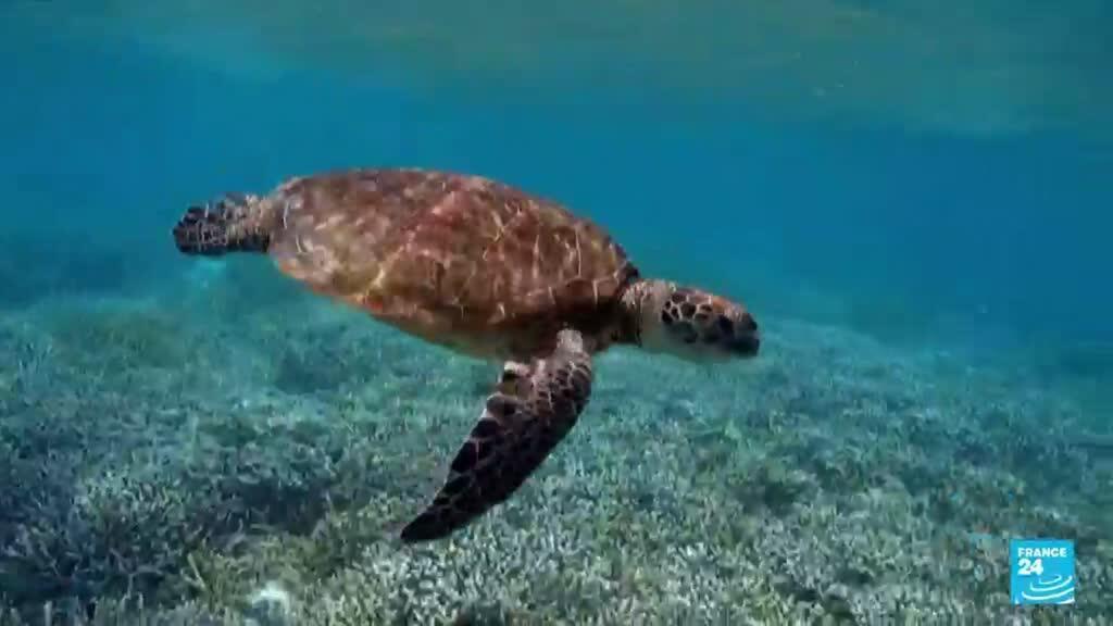 2021-07-25 14:36 Australia: Gran Barrera de Coral no entró en la Lista de Patrimonio Mundial en Peligro de la Unesco