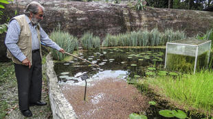 Botanist Alberto Gomez cleans a lake at his botanical garden in Quindio, Colombia