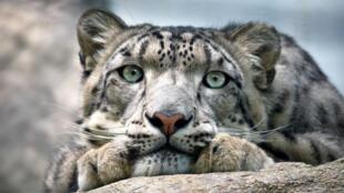 Être ou ne pas être menacé d'extinction, telle est la question.