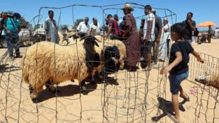 ليبيون في سوق الماشية في تاجوراء جنوب شرق طرابلس في 28 تموز/يوليو 2020 قبل عيد الأضحى