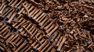 صورة التقطت بتاريخ 9 نيسان/أبريل 2019 تظهر عظام ضحايا عثر عليها حفر كانت مقبرة جماعية خلال الإبادة الجماعية في رواندا سنة 1994