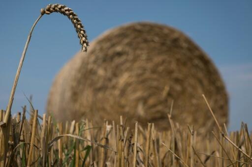 Sécheresse et canicule font flamber le blé et les céréales sur les marchés mondiaux des matières premières agricoles cet été