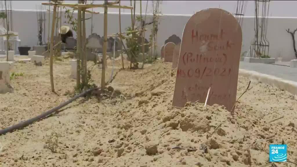 """2021-06-10 06:48 Un """"Jardin d'Afrique"""" en Tunisie : les plantes du paradis"""