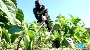 2020-07-10 10:12 Italie : un groupe de migrants monte une coopérative agricole