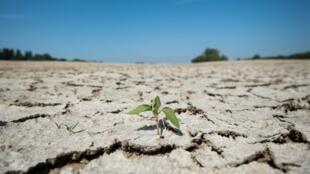 Un zone asséchée de la Loire à Montjean-sur-Loire, dans l'ouest de la France, le 24 juillet 2019, alors que la sécheresse régnait sur une grande partie de l'Europe.