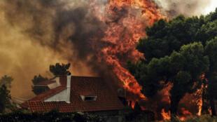 Les feux de forêt gagnent la région de Kineta, près d'Athènes, le 23 juillet 2018.