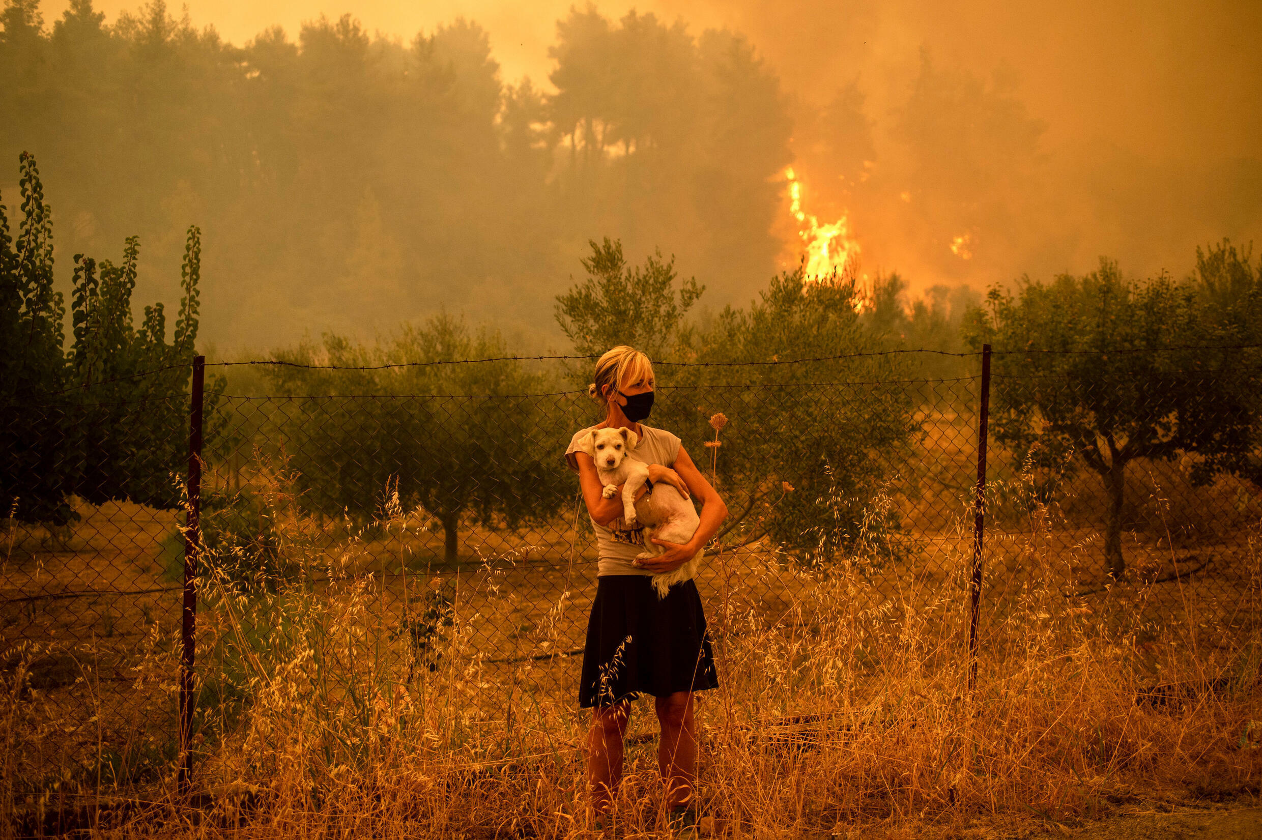 Forest fires on the island of Evia have charred pine forests, destroyed homes and forced tourists and locals to flee