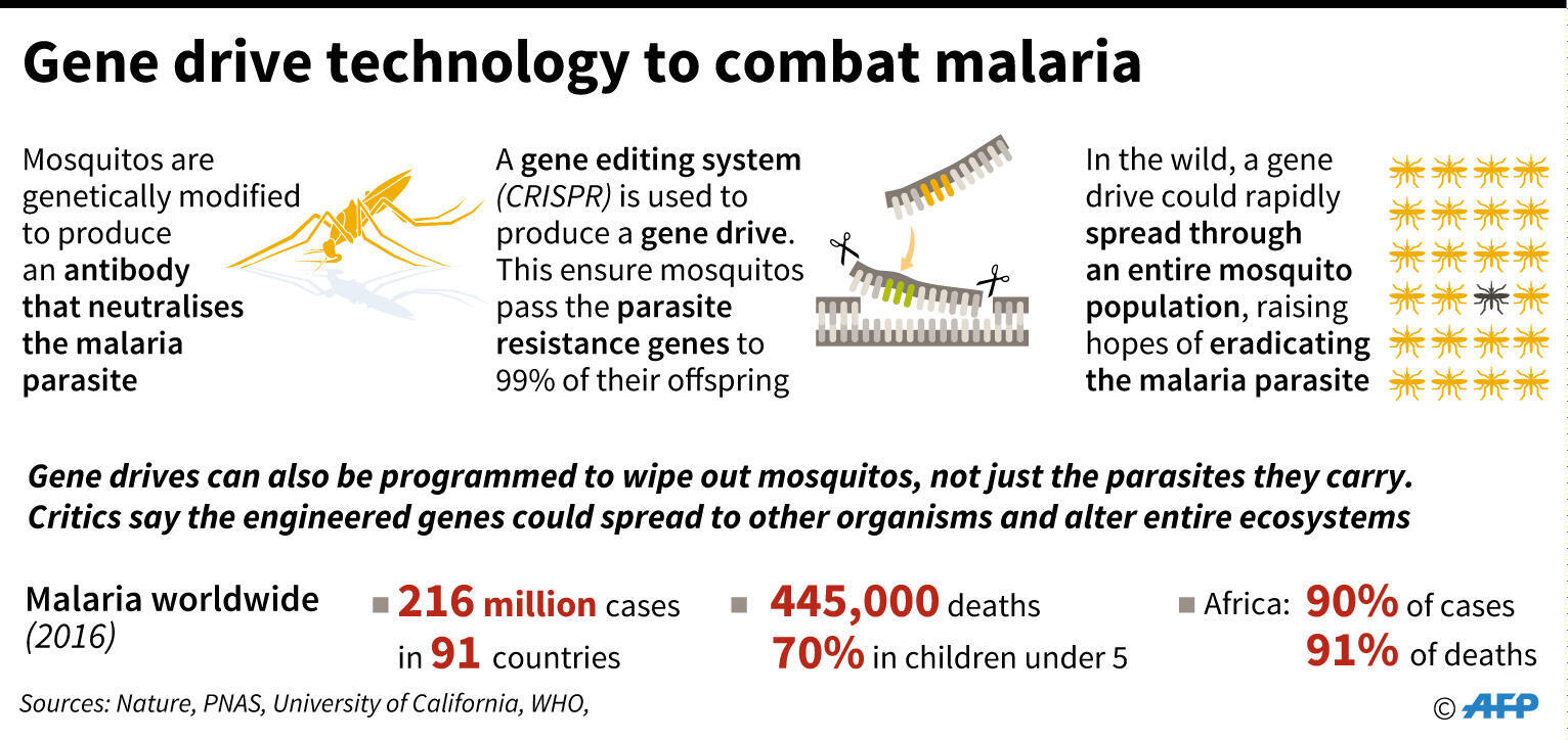 How gene drive technology could be used to combat malaria. Includes factbox on malaria worldwide