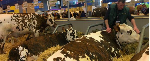 سيمو، مربي أبقار، يبلغ من العمر 32 عاما، لم يتلق أي راتب منذ ثلاث سنوات