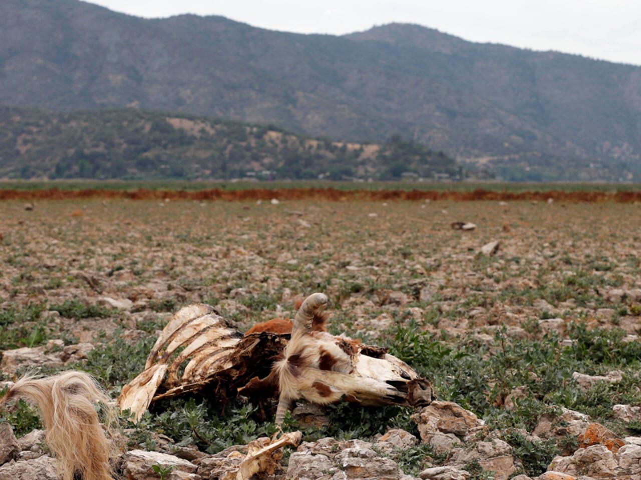 Megasequía empuja a Chile a una de sus peores crisis hídricas