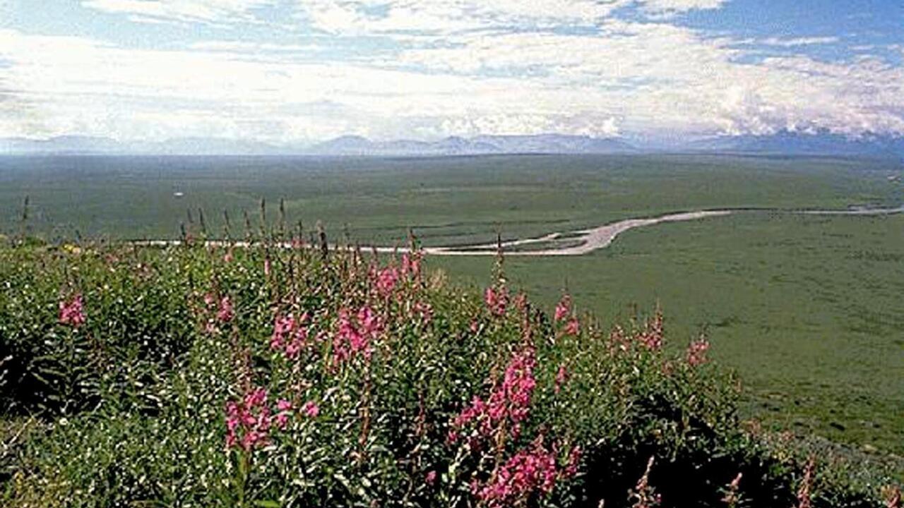 واشنطن تعلّق عمليات التنقيب عن النفط في محمية طبيعية بآلاسكا