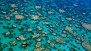 La Grande Barrière de corail blanchit pour la seconde année consécutive.
