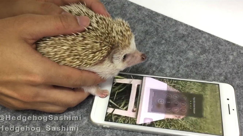 L'empreinte digitale la plus cute du monde.