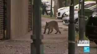 2020-03-30 16:13 Coronavirus : En ville, la voie est libre pour les animaux