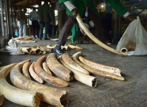 Wildlife meet mulls trade rules to counter 'unprecedented' species declines