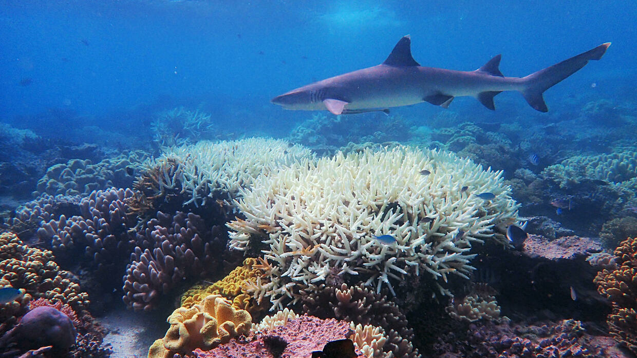Global warming to cause 'catastrophic' species loss: study - France 24