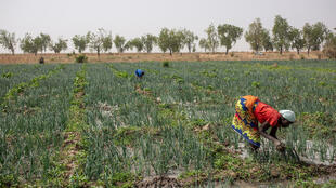 Cameroon-farmworkers-000_1PX7TN