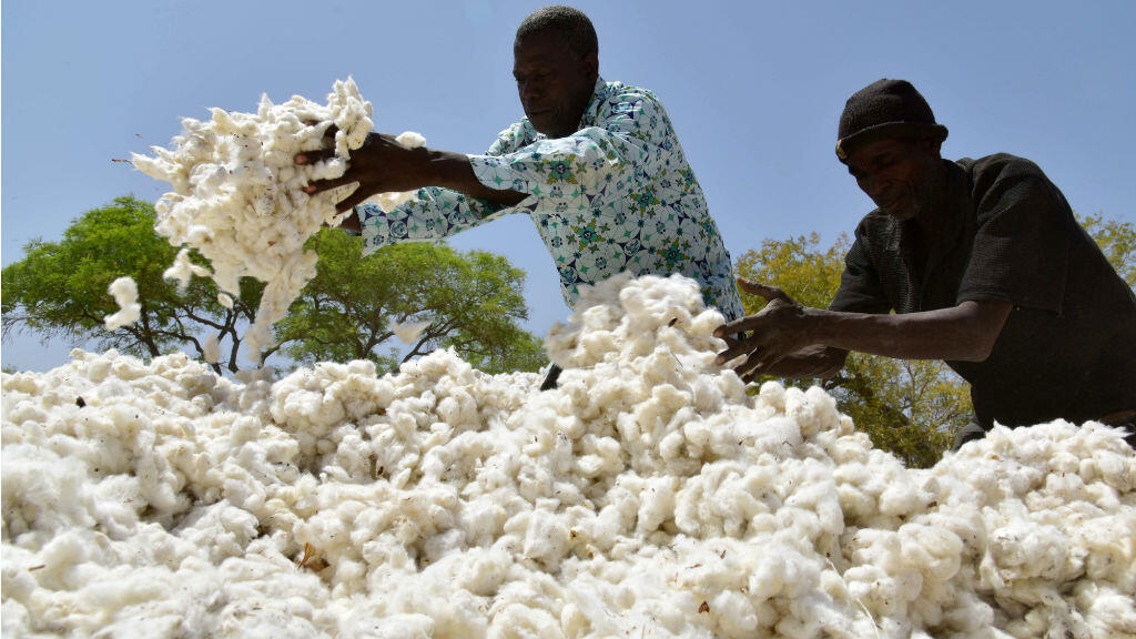 Des cotonculteurs le 3 mars 2017 à Boromo, au centre du Burkina-Faso.