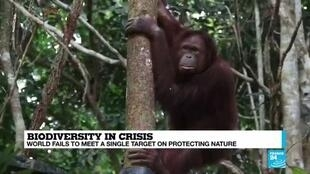 2020-09-16 08:18 Biodiversity in crisis: World fails to meet a single target on protecting nature, UN warns