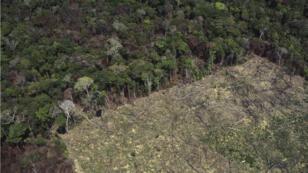 La forêt amazonienne jouit d'une incroyable biodiversité en Amérique du Sud, mais la menace de la déforestation pèse encore sur elle.