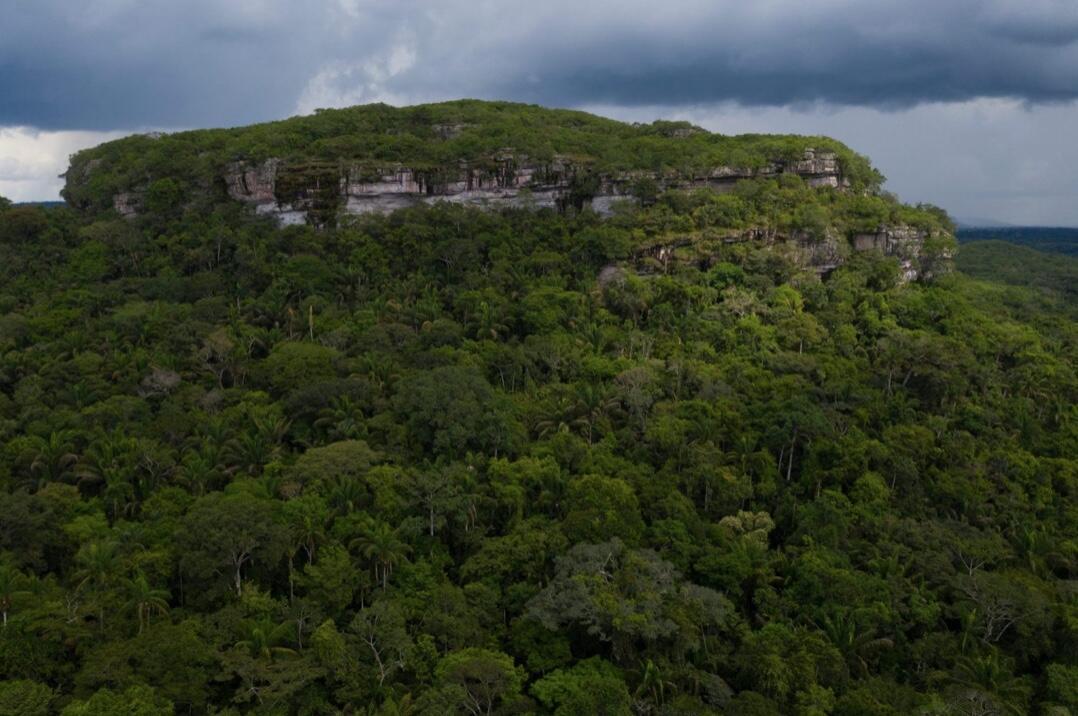 Los tepuyes son formaciones geológicas que se levantan en plena selva amazónica, al oeste del Escudo Guyanés. Varios de ellos, en los más de 4 millones de hectáreas del Parque Nacional Natural Chiribiquete, albergan el complejo de pinturas rupestres más vasto y antiguo de América. En este marco de inmensa riqueza de biodiversidad y tesoros arqueológicos se libra un pulso entre la deforestación y la conservación que involucra a campesinos pobres, ganaderos, autoridades corruptas, grupos armados ilegales, traficantes de fauna y de cocaína, el Gobierno y los militares.