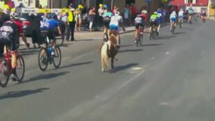 Cours cours petit poney !