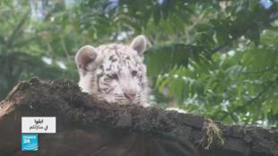 حدائق الحيوانات في زمن كورونا