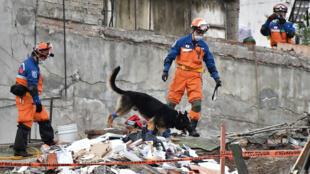 Rescatistas japoneses con un perro de rastreo participan en la búsqueda de sobrevivientes en un edificio derrumbado en Ciudad de México, el 22 de septiembre de 2017.