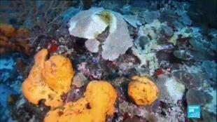 2021-02-26 10:13 Environnement : en Martinique, une nouvelle menace plane sur les coraux entourant l'île