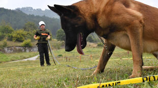 Bosnia has become a key centre for dogs to be trained in mine detection