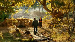 """مشهد من فيلم """"شجرة الكمثرى البرية"""" لنوري بيلجي جيلان"""