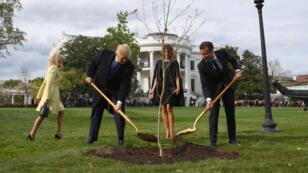 Coup de pelle symbolique dans le jardin de la Maison Blanche, lundi 23 avril 2018, pour le don d'un jeune chêne par Emmanuel Macron à Donald Trump.
